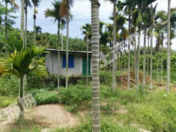 立才农场芒果地槟榔水塘转让约13亩