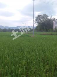 池州青阳县 Qh02-1 40亩 水田 转让