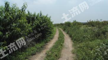 生态农庄160果园地出租