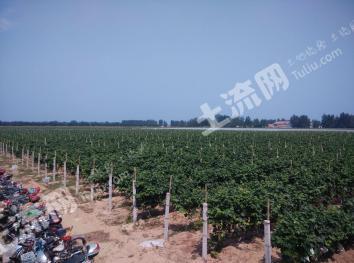 濮阳200亩葡萄园转让