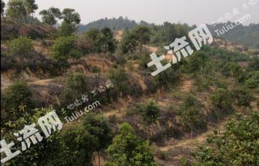 湖南湘潭100亩林权转让