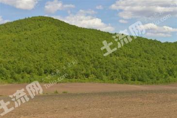 林地1800亩,榛材树地200亩转让