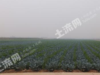 现有土地1000亩,寻找种植、养殖合作伙伴