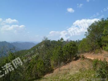 普洱市景东彝族自治县 300亩 有林地 转让