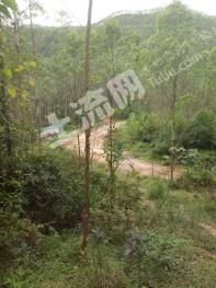肇庆广宁县 1000亩 有林地 转让
