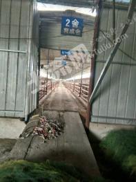 浙江湖州长兴县和平镇大型羊场养殖场转让