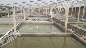 温室大棚加鱼池出租