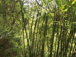 梅州梅县区 3000亩 有林地 转让
