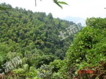 九江武宁县 9981.5亩 有林地 转让