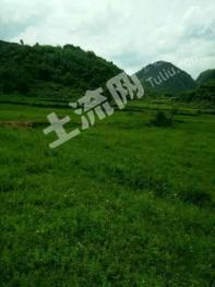 广东清远市120亩 优质耕地/旱地 出租
