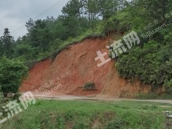 赣州市 1000亩 有林地 转让