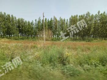 新疆伊犁察县八乡160亩林地转让201635