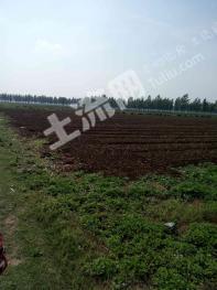 南阳新野县 250亩 设施农用地 合作