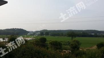 长沙长沙县黄花镇开元东路旁 300亩 水田 转让xy00216