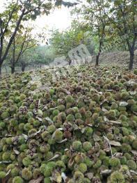 延安黄龙县 1500亩 有林地 出租