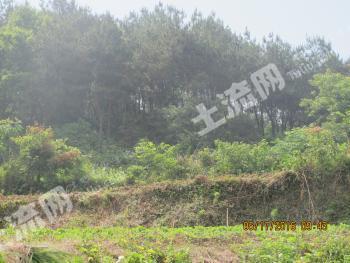 鄂州梁子湖区 500亩 灌木林地 出租