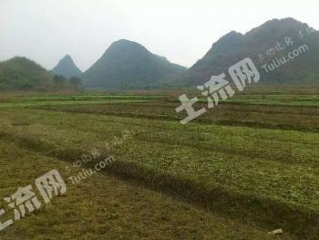 广东清远 400亩 水田 出租