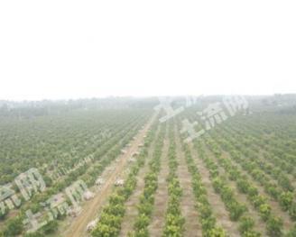 合作1100亩农业用地