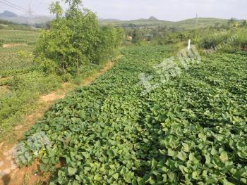 朝阳朝阳县 5亩 养殖用地 转让