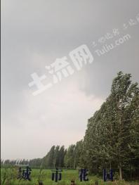 邯郸邯山区 35亩 水浇地 出租