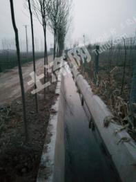 济南商河 150亩 水浇地 合作或转让