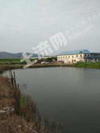 广州番禺区 110亩 养殖用地 转让