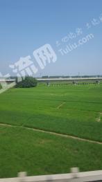 安徽凤阳县小岗村2000亩 优质水田 出租