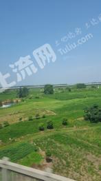 安徽凤阳县小岗村1000亩 旱地 出租