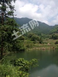 台州三门县 350亩 有林地 合作