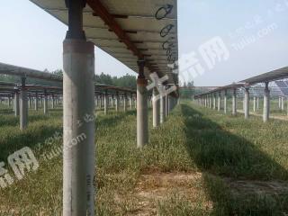 徐州沛县 895亩 水浇地 转让