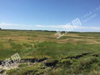 绥化肇东市 690亩 天然牧草地 转让