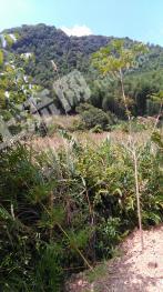 赣州全南县 300亩 水浇地 转让