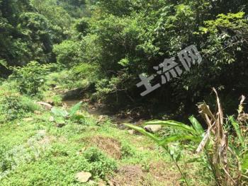 广东梅州 3000亩 灌木林地 转让