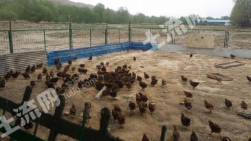 海东平安区 30亩 养殖用地 合作