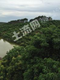 陆川县25亩 果园 转让