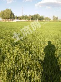 金昌永昌县 77亩 水浇地 出租