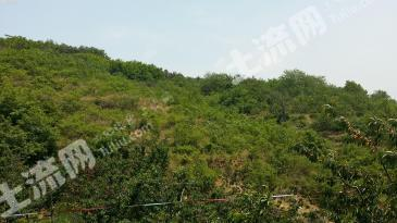 曲靖陆良县 100亩 其它林地 出租