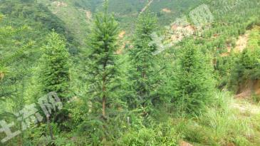 贺州钟山县 780亩 有林地 转让