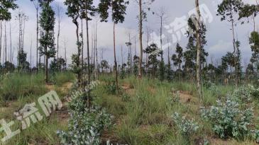 500亩优质种养殖林地转让