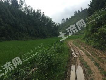 吉安吉水县 1000亩 水田 出租(236)