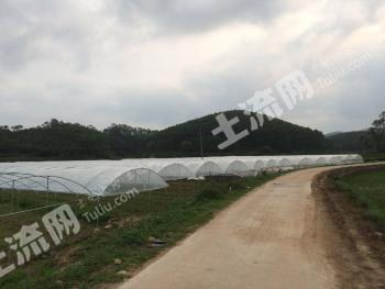 玉林陆川县 45亩 农场 转让