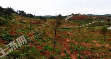 株洲攸县100亩 药材林 (部分已进入丰产期)基地转包