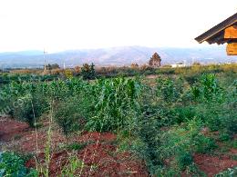 转让12.5亩农业用地