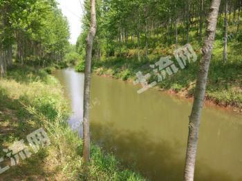 黄冈红安县 280亩 其它林地 低价转让