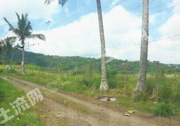 菲律宾 宁静的农场用地 98000824