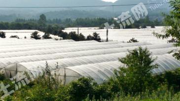 南京江宁区 36亩 满产葡萄园出租