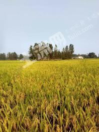 信阳固始县200亩水浇地出租
