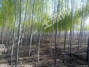 潍坊诸城市 60亩 有林地 转让