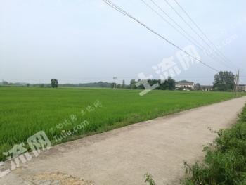 常德汉寿县 2500亩 水田 出租