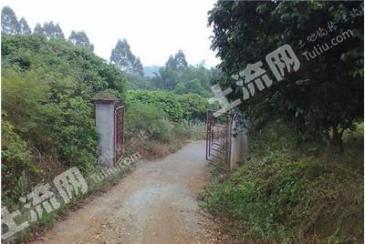 惠州博罗县 65亩 果园 转让